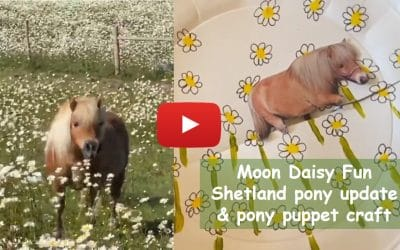 Moon Daisy fun – Shetland pony update & pony puppet craft