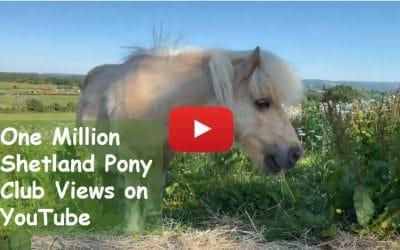 One Million Shetland Pony Club Views on YouTube