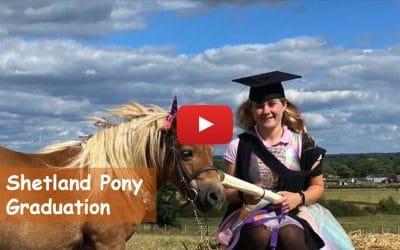 Shetland Pony Graduation