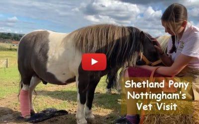 Shetland Pony Nottingham's Vet Visit