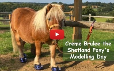 Creme Brulee the Shetland Pony's Modelling Day
