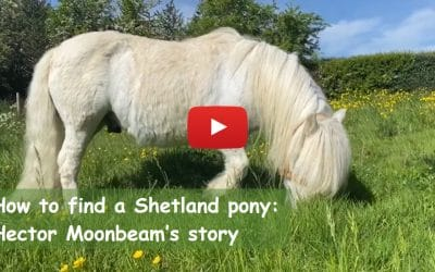 How to find a Shetland pony: Hector Moonbeam's story
