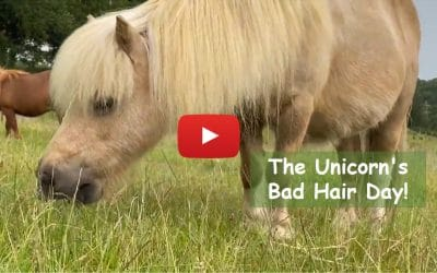 The Unicorn's Bad Hair Day!