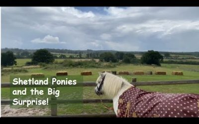 Shetland Ponies and the Big Surprise!