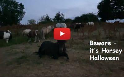 Beware, it's Horsey Halloween at Shetland Pony Club