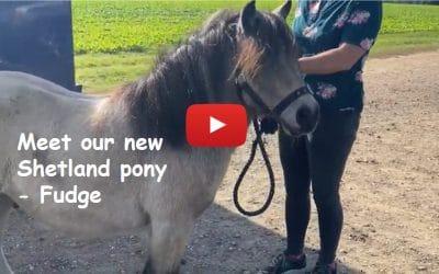 Meet our new Shetland pony, Fudge