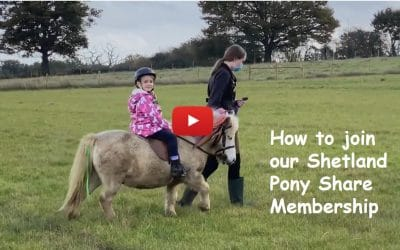 How to join our Shetland Pony Share Membership