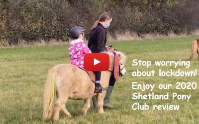 Stop worrying about lockdown! Enjoy our 2020 Shetland Pony Club review