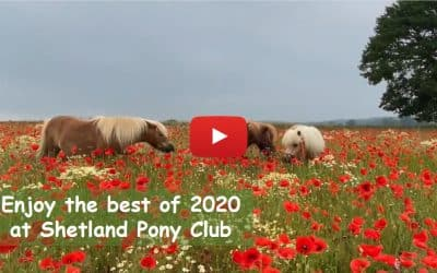 Enjoy the best of 2020 at Shetland Pony Club