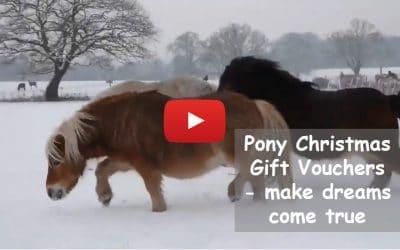 Pony Christmas Gift Vouchers – make dreams come true