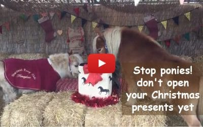 Stop ponies! don't open your Christmas presents yet