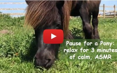 Pause for a pony: relax for 3 minutes of calm, ASMR