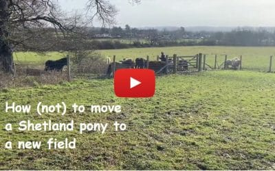 How (not) to move a Shetland pony to a new field