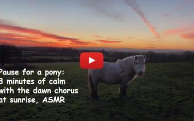 Pause for a pony: 3 minutes of calm with the dawn chorus at sunrise, ASMR