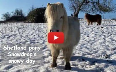 Shetland pony Snowdrop's snowy day