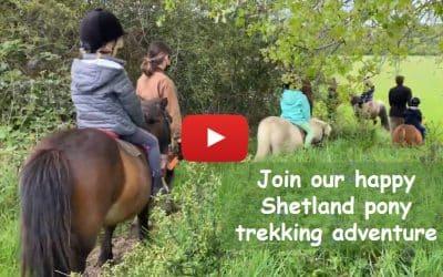 Join our happy Shetland pony trekking adventure