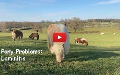 Pony Problems: Laminitis