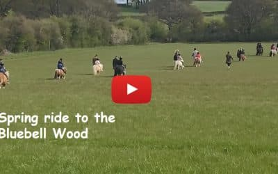 Spring pony ride to the Bluebell Wood