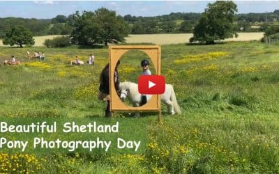 Beautiful Shetland Pony Photography Day