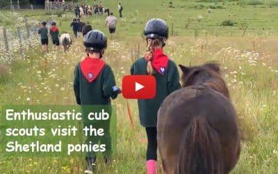 Enthusiastic cub scouts visit the Shetland ponies
