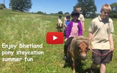 Enjoy Shetland pony staycation summer fun