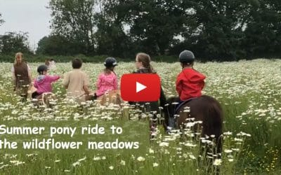 Summer pony ride to the wildflower meadows
